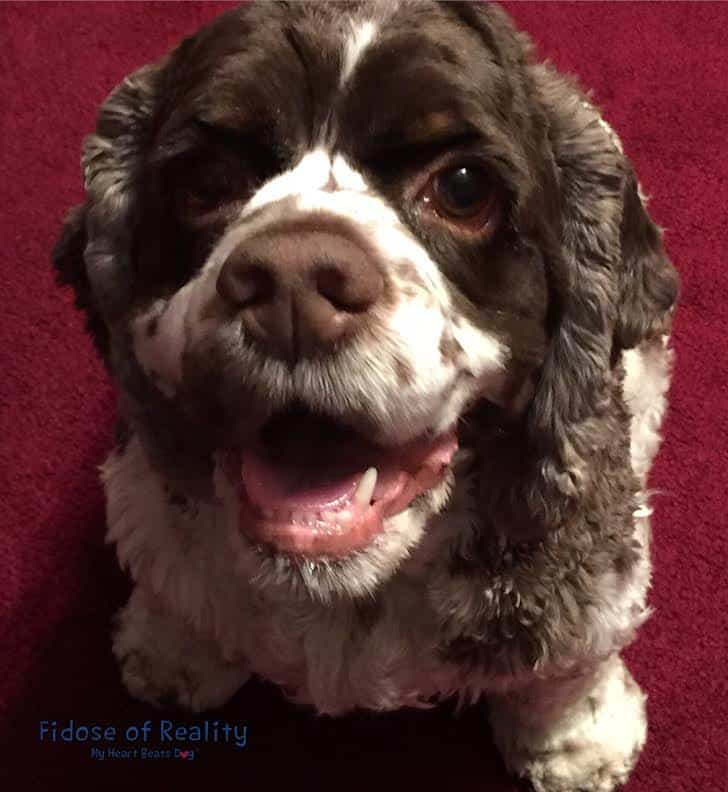 Happy dog means a happy life #BayerExpertCare #ad
