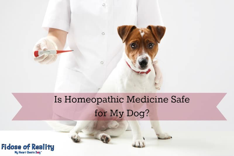 Is Homeopathic Medicine Safe for My Dog - Fidose of Reality
