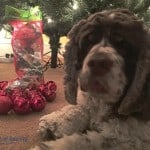 What to Give Santa's Favorite Dog for the Holidays #MakingDogsSmile