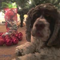 Santa's Favorite Dog with #MakingDogsSmile #ad