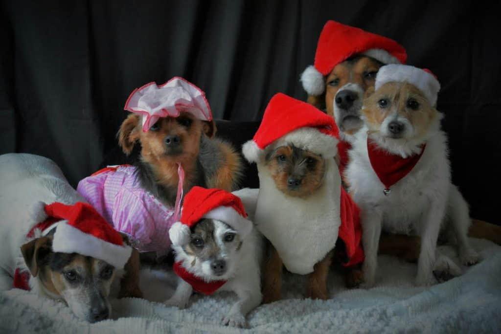 Christmas dog photo contest