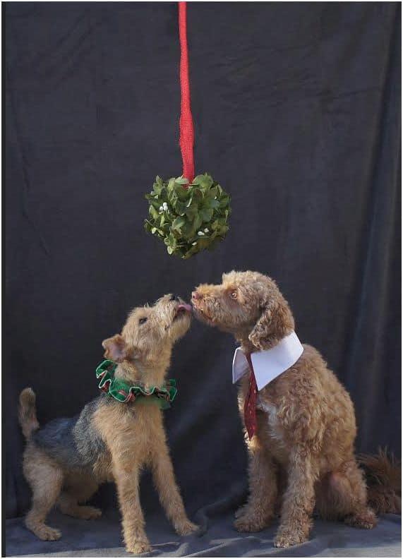Christmas Mistletoe dogs
