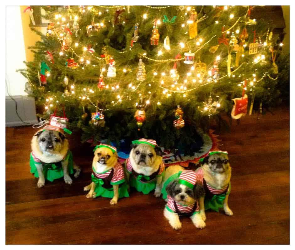 Cute Christmas dogs