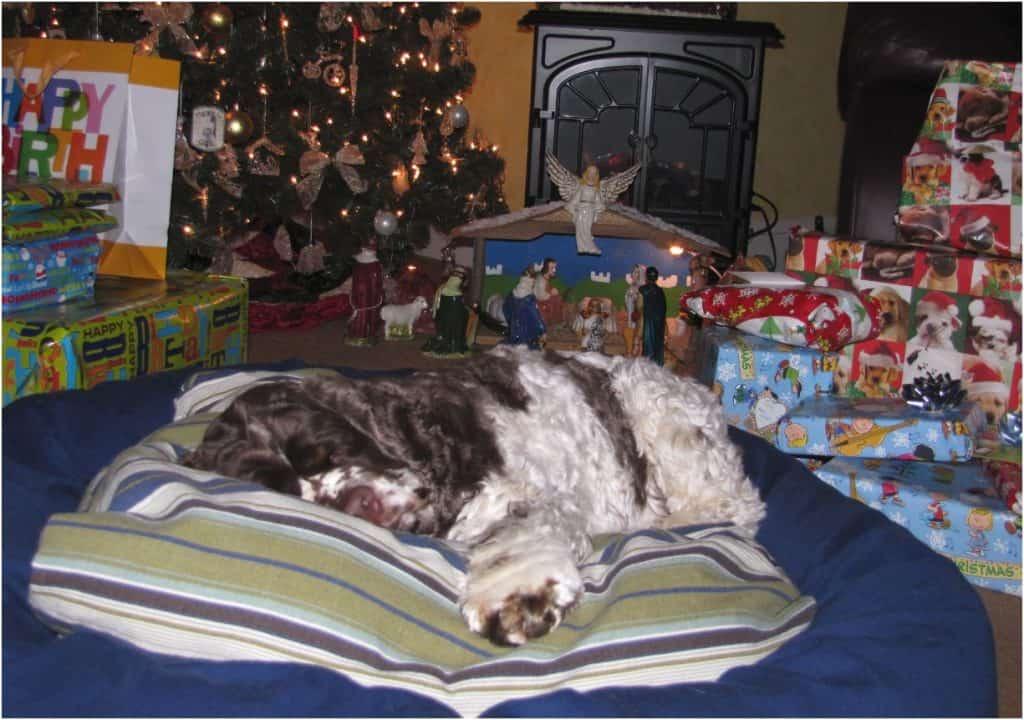 The Night Before Christmas with #MakingDogsSmile #sponsored
