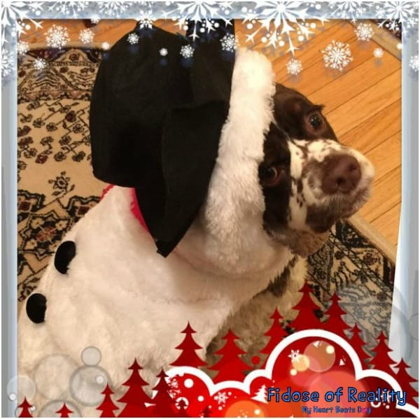Dexter the Snowdog is ready for winter