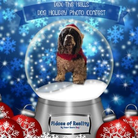 Dex the Halls Dog Holiday Photo Contest Winners 2015
