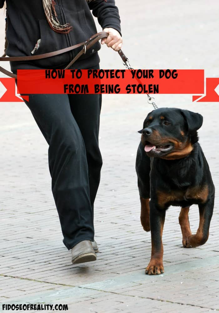 Protect dog from being stolen