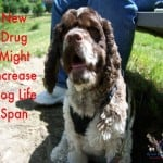 New Drug Might Increase Dog Life Span