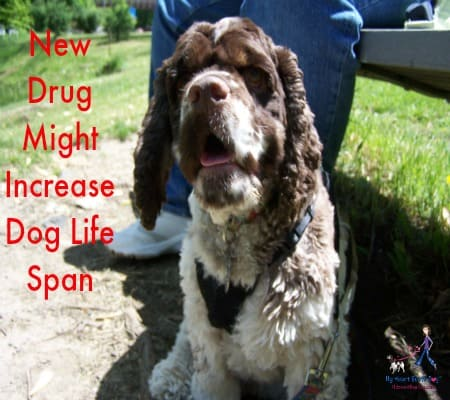 New Drug Might Increase Dog Life Span