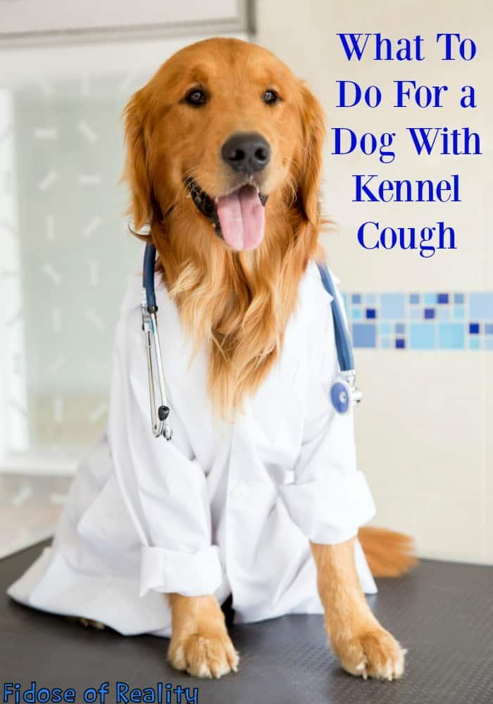 Kennel Cough From Dog Park