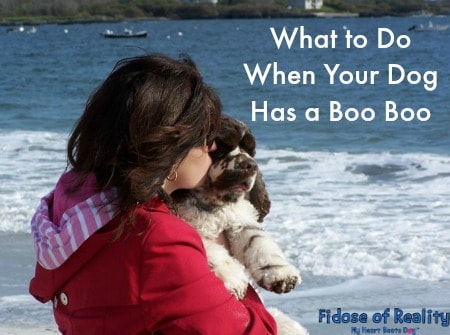 What to Do for a Dog With a Wound #BayerExpertCare