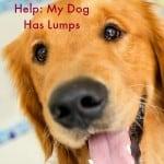 Dog lumps
