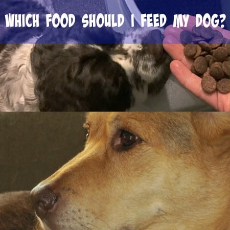 Which Food Should I Feed My Dog #NaturalBalance