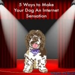 5 Ways to Make Your Dog an Internet Sensation