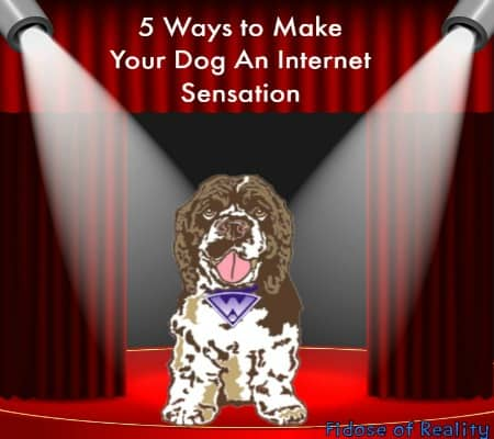 5 Ways to Make Your Dog an Internet Sensation