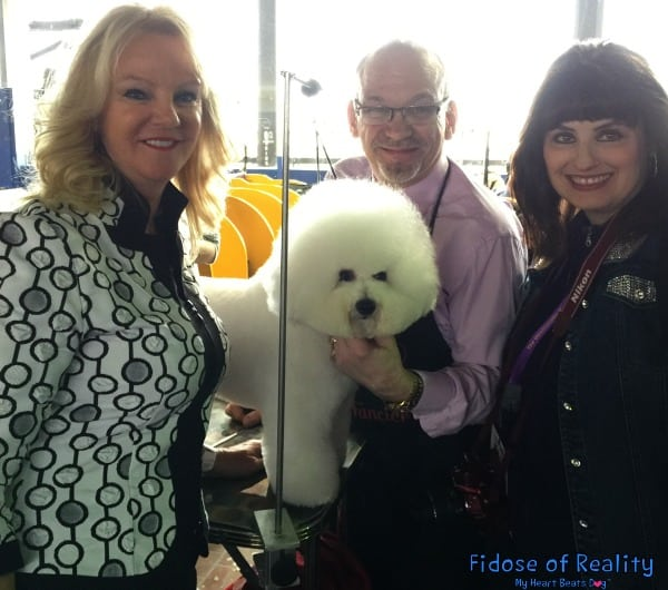 Bichon Frise at Westminster