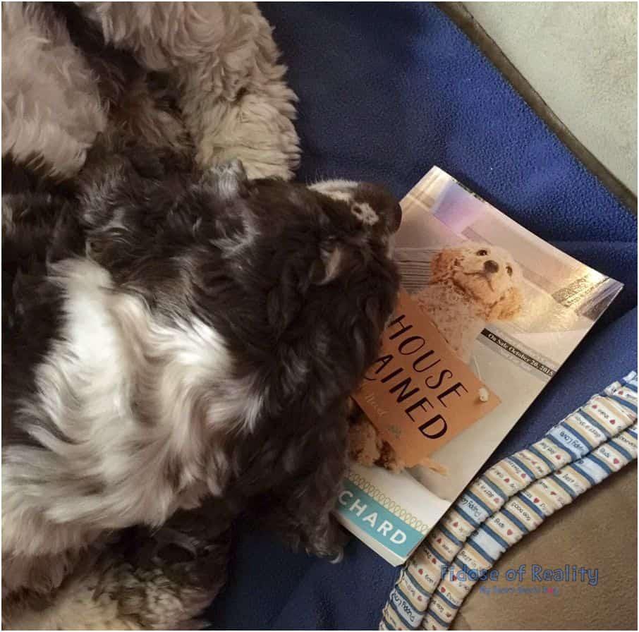 Jackie Bouchard dog book
