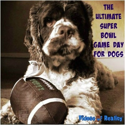 The Ultimate Super Bowl Game Day for Dogs