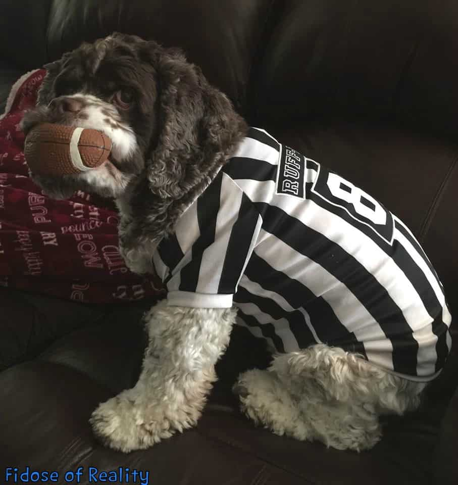Football fun for dogs