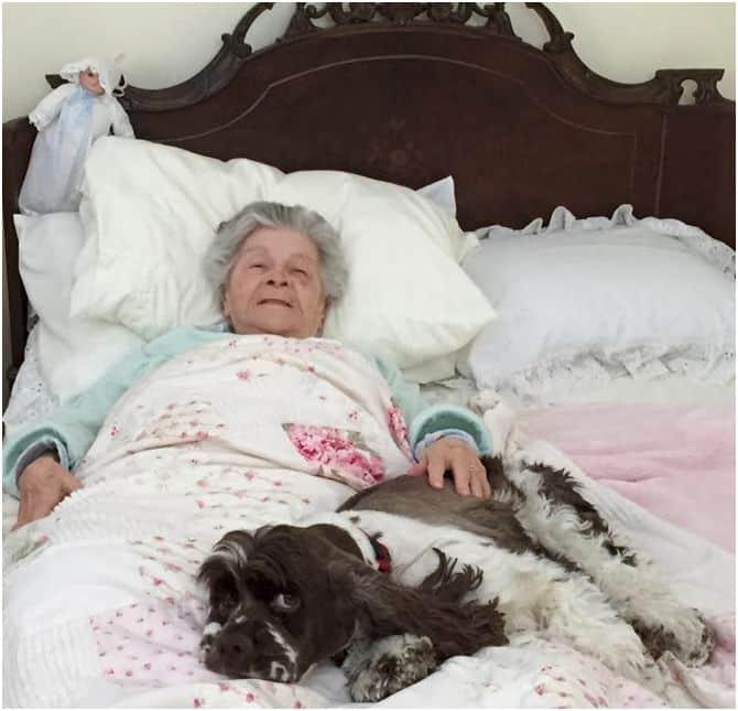 Dog cuddling in bed