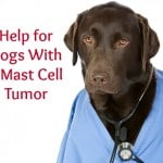 Help for Dogs with a Mast Cell Tumor
