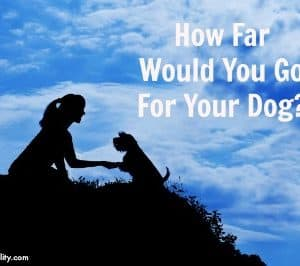 How Far Would You Go For Your Dog?