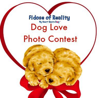 Dog Love Photo Contest