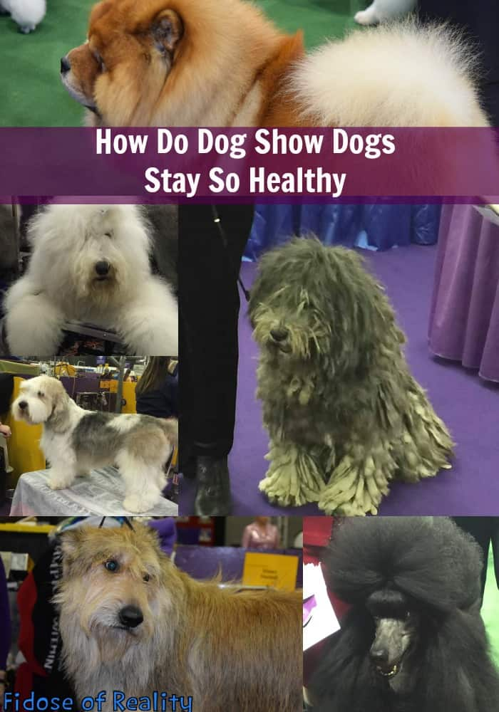 How to keep a dog healthy