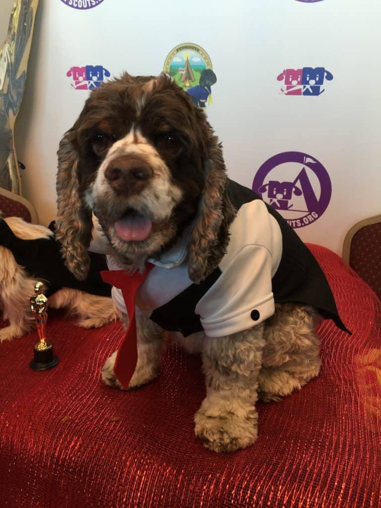 Dog at Oscar party