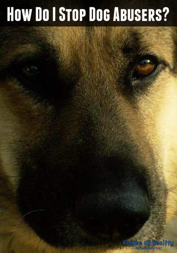 prevent dog abuse