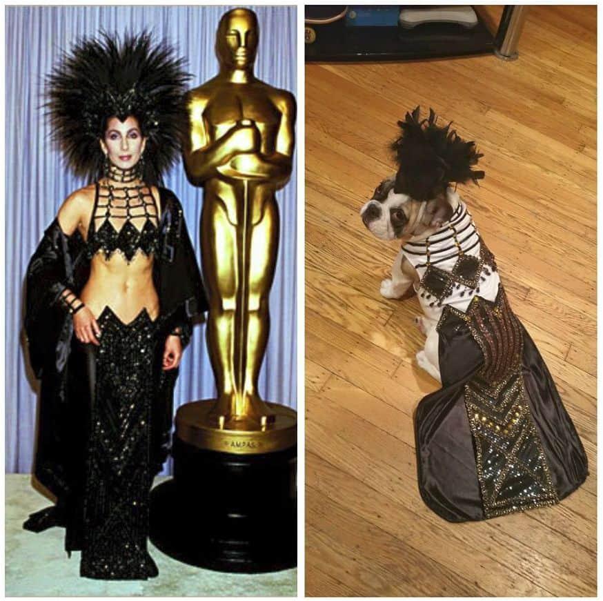 Cher dog