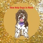 Fundraiser Goes to the Dogs