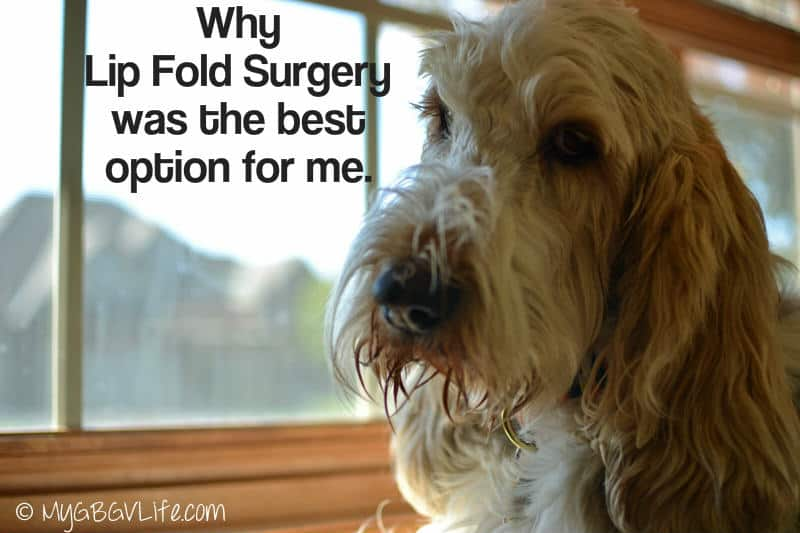 Dog lip fold surgery
