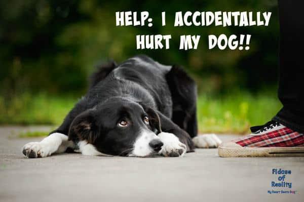 Accidentally hurt my dog