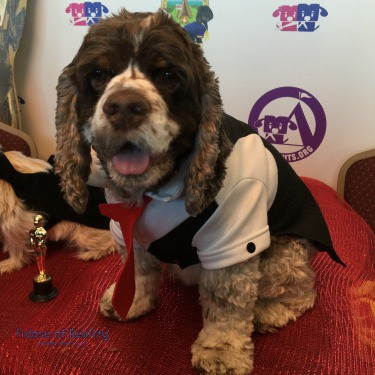 How to Host an Oscar Party for Dogs