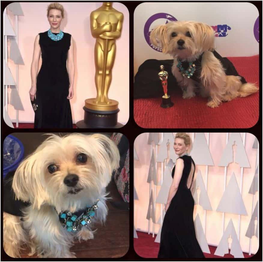 Cate Blanchett dog
