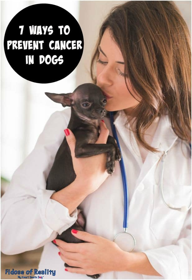Prevent cancer in dogs