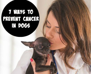 7 Ways to Prevent Cancer in Dogs