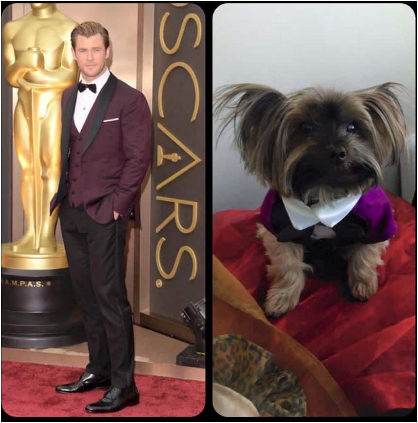 Oscar party dog