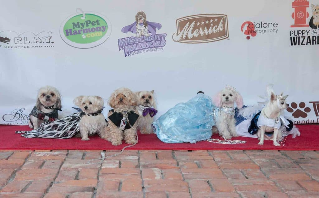 Pup Scouts red carpet