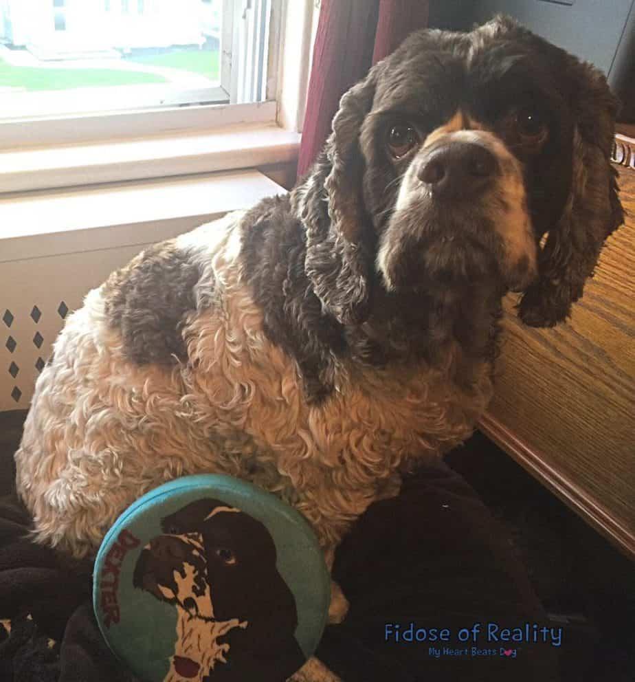 PrideBites customized dog frisbee toy