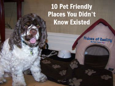 10 Pet Friendly Places You Didn't Know Existed Giveaway