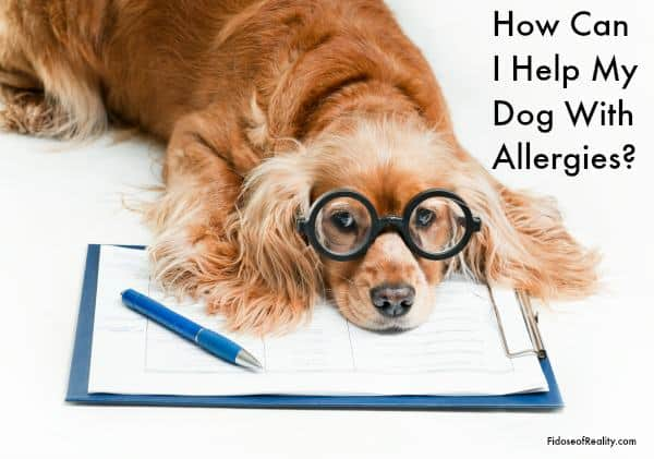 Dog with allergies