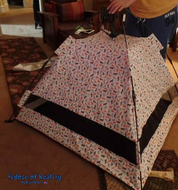 Setting up outdoor dog tent