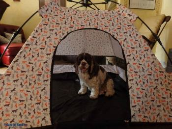 Get Outdoors With Your Dog Fun and Giveaway