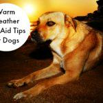 Warm Weather First Aid Tips for Dogs