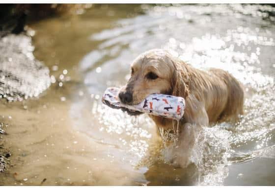 dog float toy