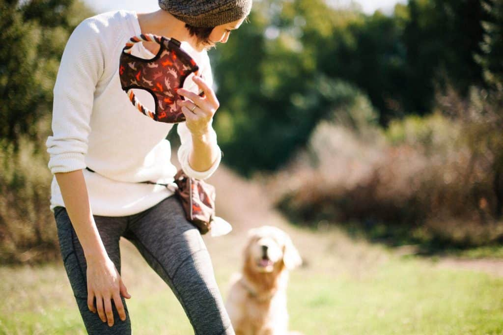 Outdoor dog toy from PLAY
