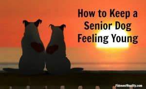 How to Keep a Senior Dog Feeling Young