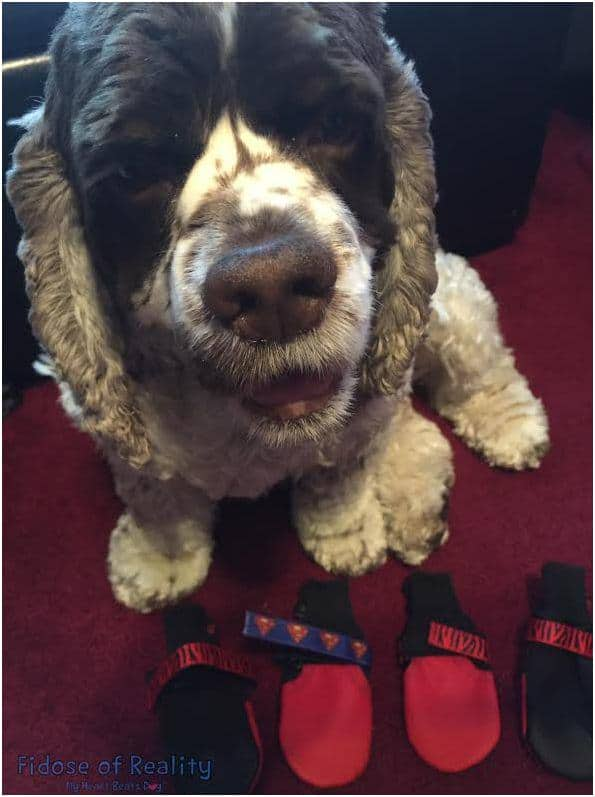 Poochie Boots for dogs